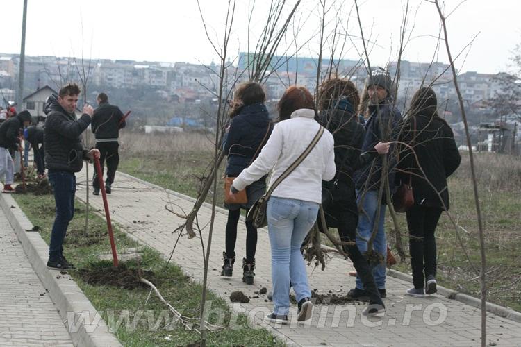 plantare copaci anl cismea (11)