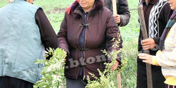 Protest inedit pe un drum judeţean din Botoşani. Vreo 30 de oameni în frunte cu primarul au ieşit la plantat copaci pe DJ 294 – GALERIE FOTO