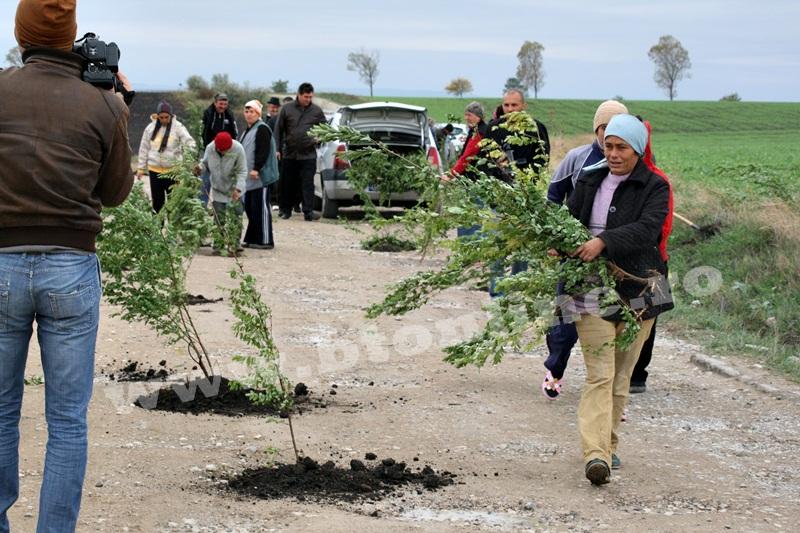 dingeni, copaci plantati pe drum judetean, protest  (12)