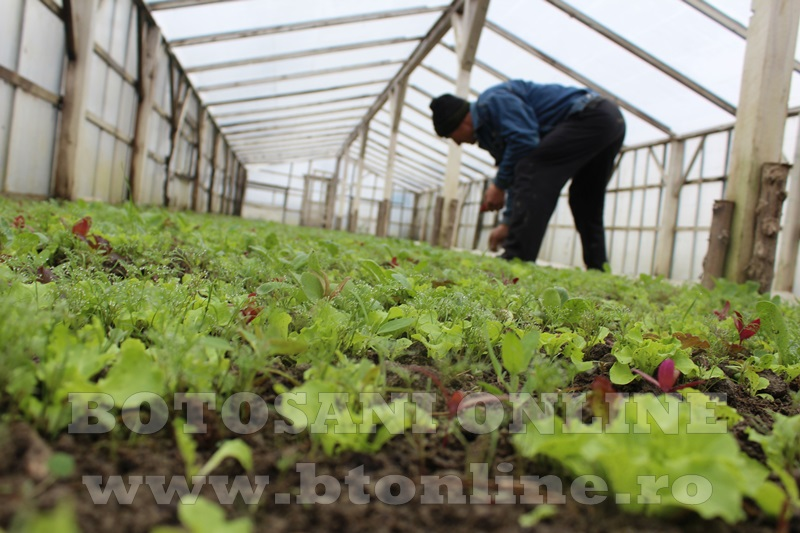 Hiliseu, solarii, legumicultori  (31)