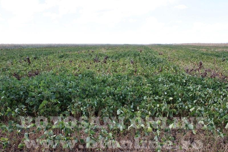 seceta in judetul Botosani (1)