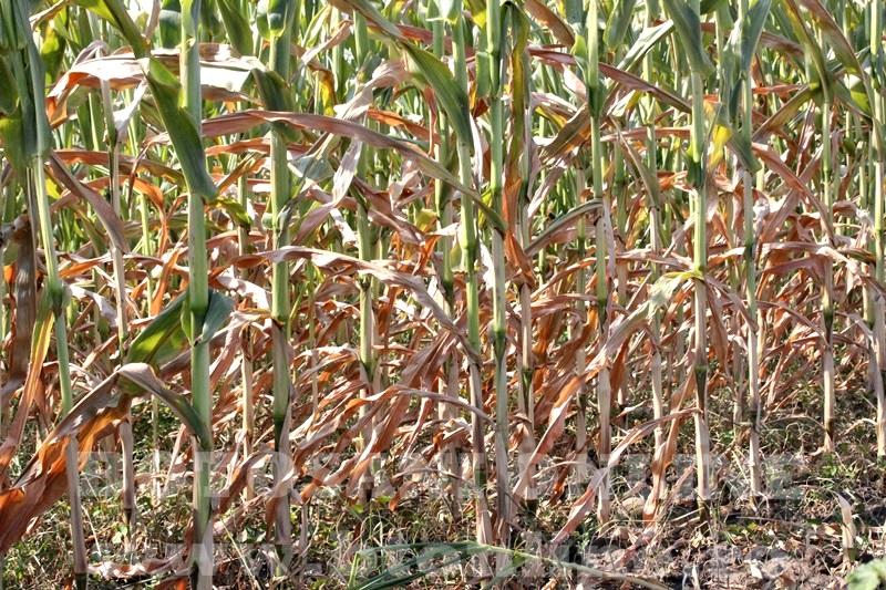 seceta in judetul Botosani (10)