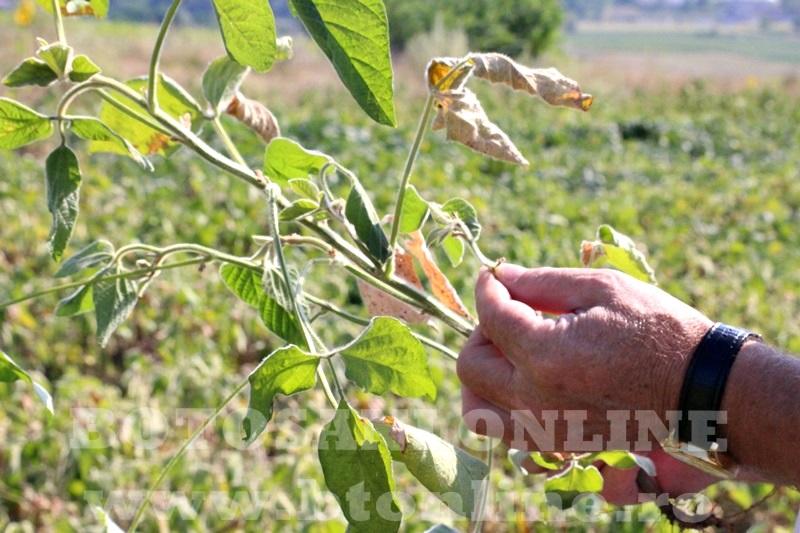 seceta in judetul Botosani (9)