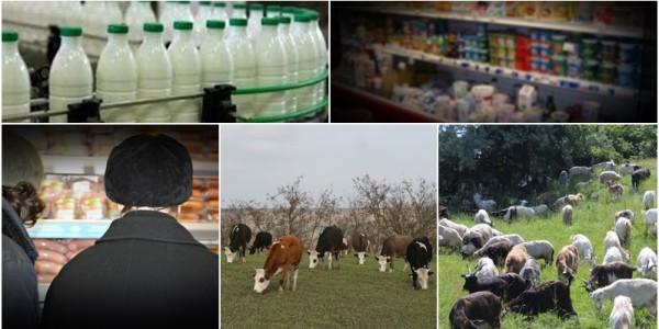 Cum au ajuns PROCESATORII şi COMERCIANŢII din Botoşani la PROFITURI URIAŞE? Cumpără un litru de lapte cu 60-80 de bani, îl ambalează şi îl vând cu 5-6 lei