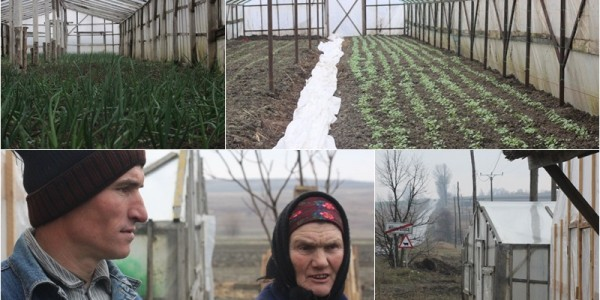 Fermierii din Hilişeu au transformat legumicultura într-o afacere şi se laudă cu produsele lor sută la sută BIO – FOTO&VIDEO