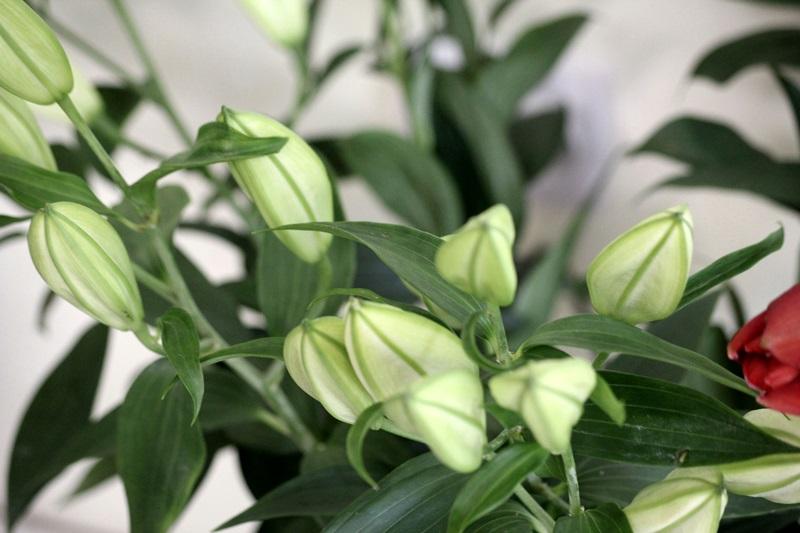 floraria anemona botosani (2)