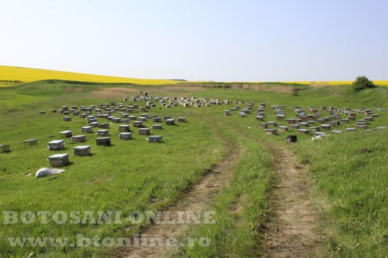 iustin marineac, apicultor din judetul botosani (13)