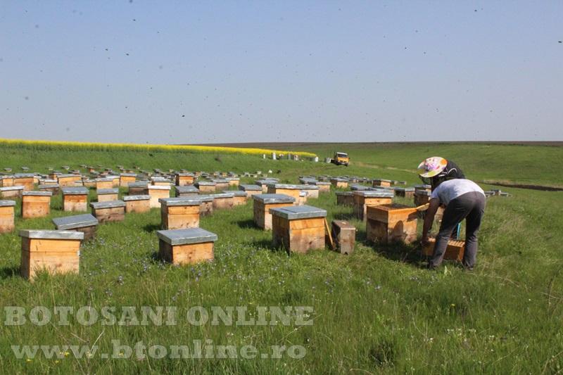 iustin marineac, apicultor din judetul botosani (16)