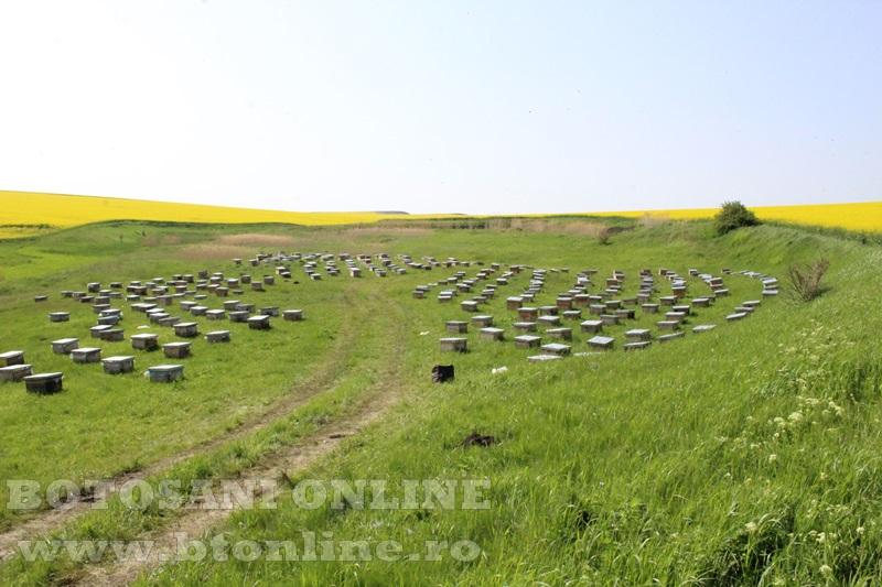 iustin marineac, apicultor din judetul botosani (17)