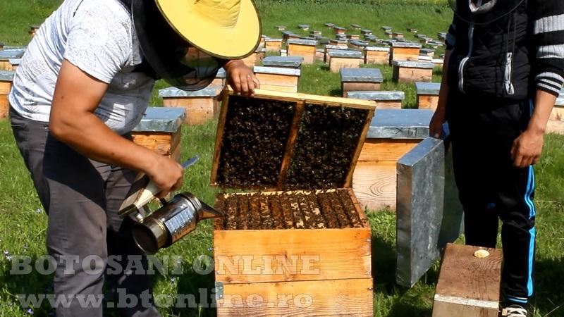 iustin marineac, apicultor din judetul botosani (19)