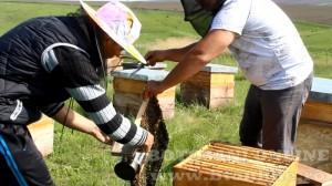 iustin marineac, apicultor din judetul botosani (22)