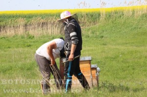 iustin marineac, apicultor din judetul botosani (8)