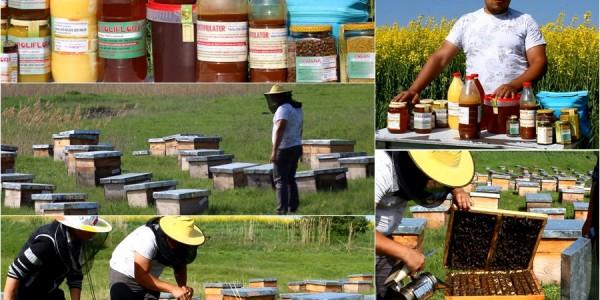 Botoşăneanul care a transformat apicultura într-o afacere iar acum are comenzi din Anglia, Spania şi Italia GALERIE FOTO&VIDEO