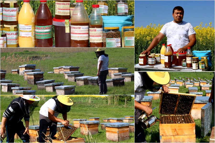 iustin marineac, apicultor din judetul botosani (colaj)
