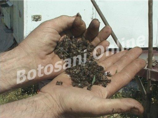 apicultori4