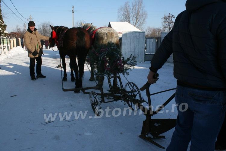 vorona 31.12.2014 obiceiuri de iarna (16)