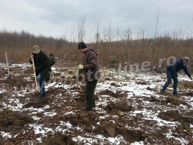 plantare copaci (3)