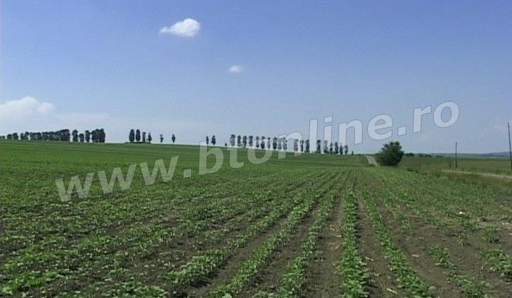 seceta teren agricol3