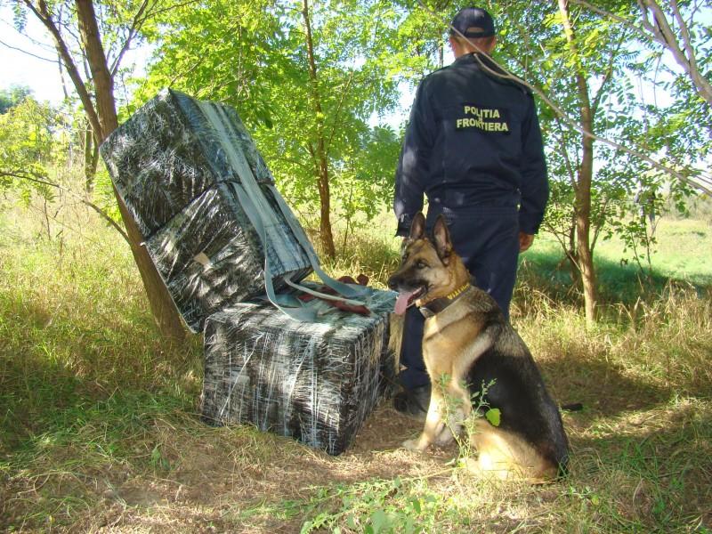 Politia de frontiera - caine politist (3)