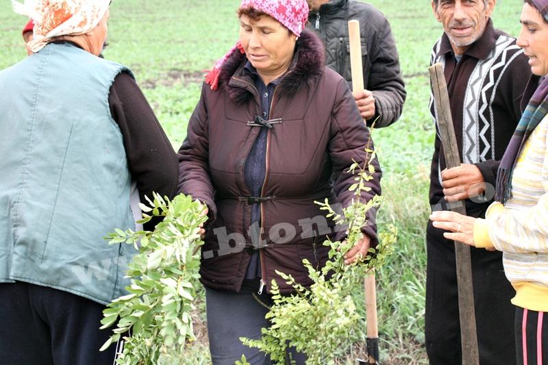 dingeni, copaci plantati pe drum judetean, protest  (1)
