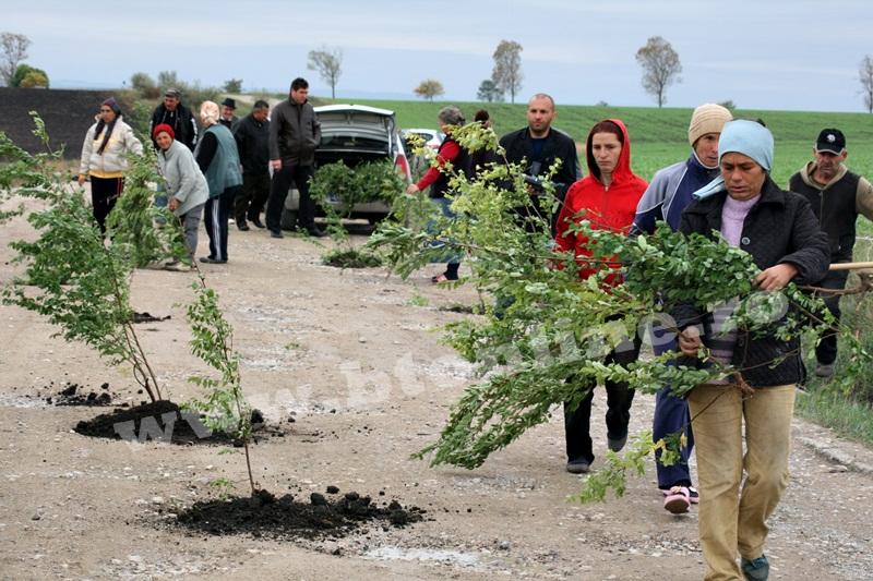 dingeni, copaci plantati pe drum judetean, protest  (13)