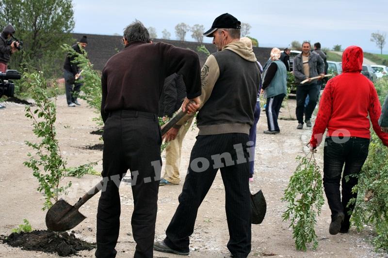 dingeni, copaci plantati pe drum judetean, protest  (14)