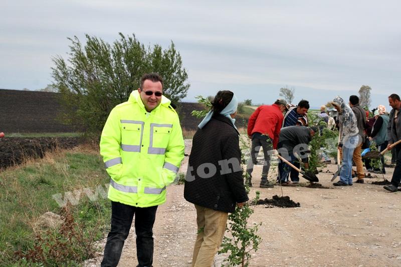 dingeni, copaci plantati pe drum judetean, protest  (18)