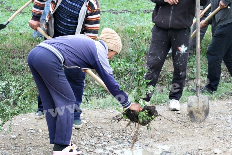 dingeni, copaci plantati pe drum judetean, protest  (2)