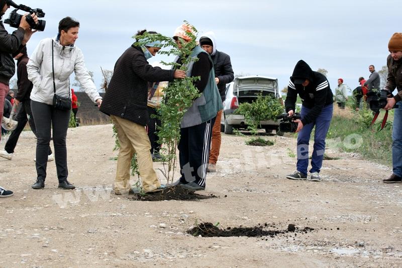 dingeni, copaci plantati pe drum judetean, protest  (5)