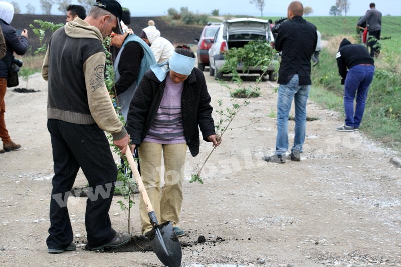dingeni, copaci plantati pe drum judetean, protest  (6)
