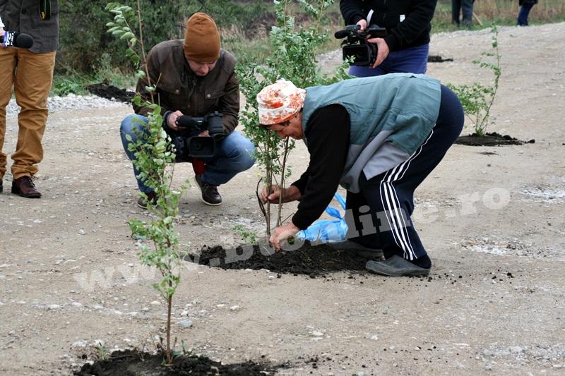 dingeni, copaci plantati pe drum judetean, protest  (7)