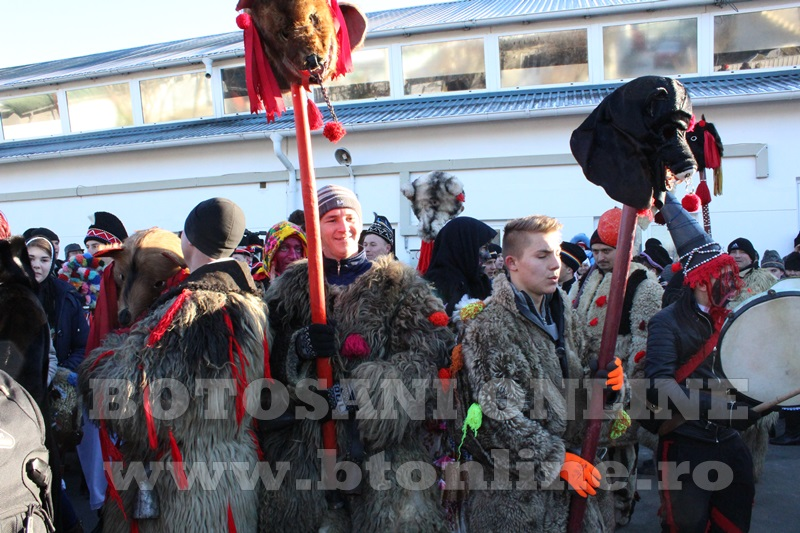 Vorona, traditii, datini si obiceiuri 31 decembrie 2015  (26)