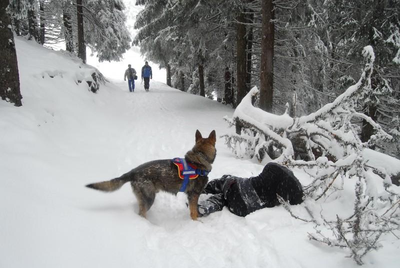 caine,  jandarmerie montana parang (1)