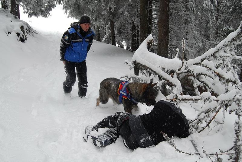 caine,  jandarmerie montana parang (2)