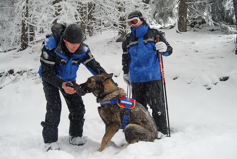 caine,  jandarmerie montana parang (4)
