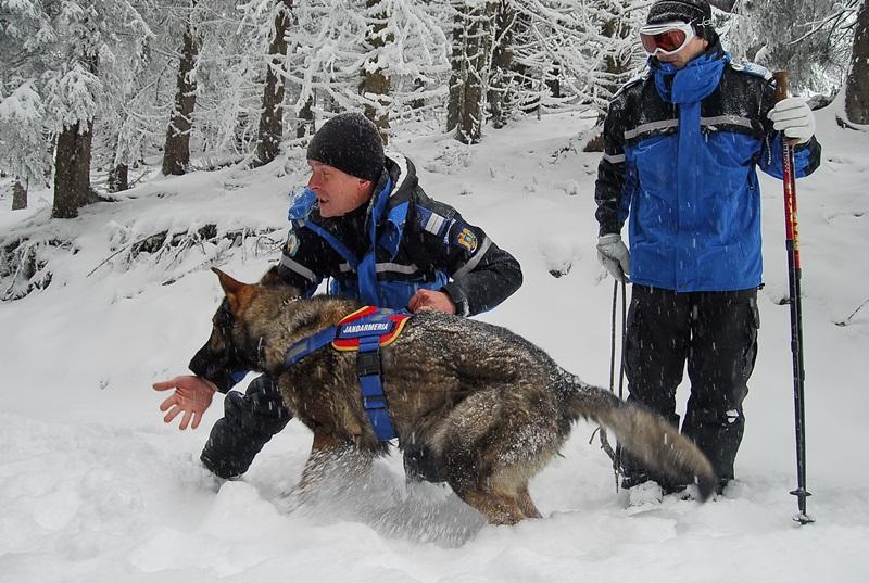 caine,  jandarmerie montana parang (5)