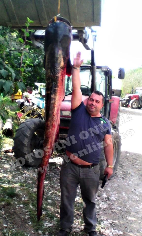 costel romanescu, captura la prut