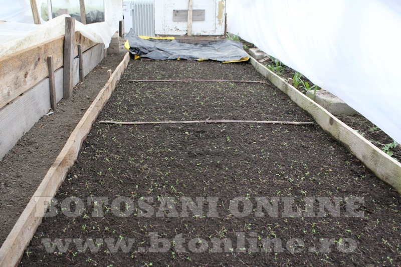Hiliseu, solarii, legumicultori  (1)
