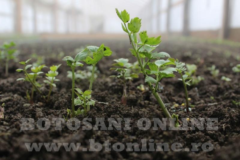 Hiliseu, solarii, legumicultori  (24)