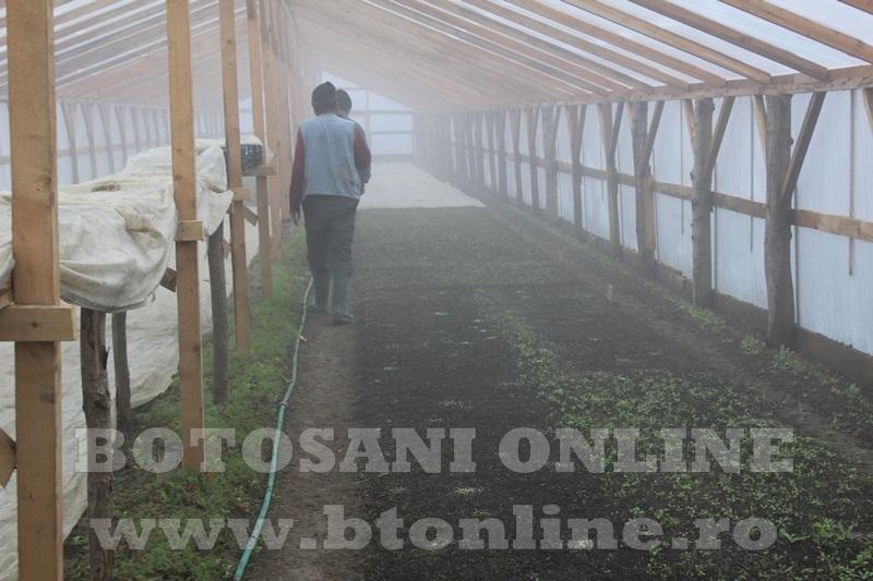 Hiliseu, solarii, legumicultori  (26)