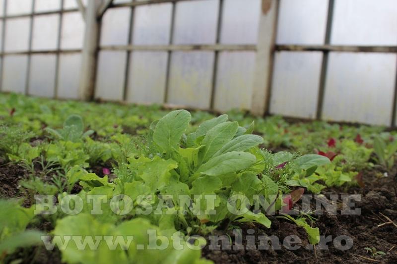 Hiliseu, solarii, legumicultori  (34)