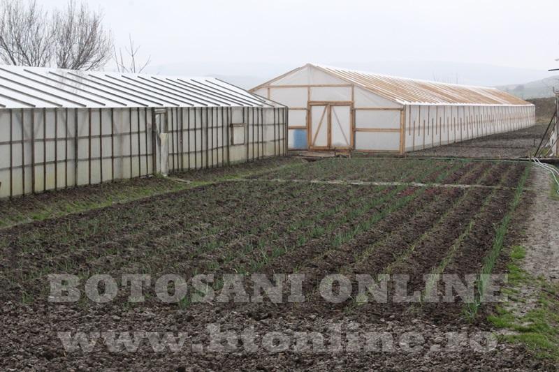 Hiliseu, solarii, legumicultori  (37)
