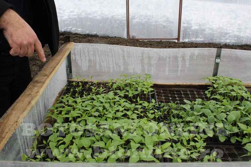 Hiliseu, solarii, legumicultori  (39)