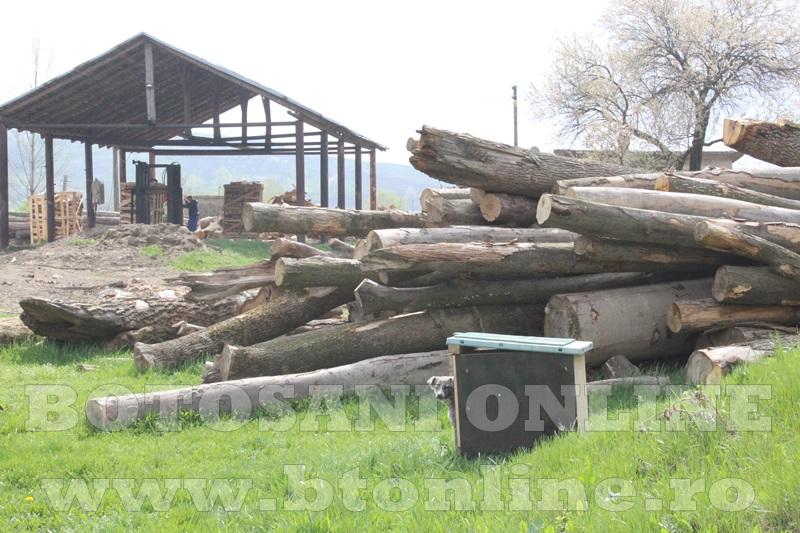 pomirla, lemn de foc (2)