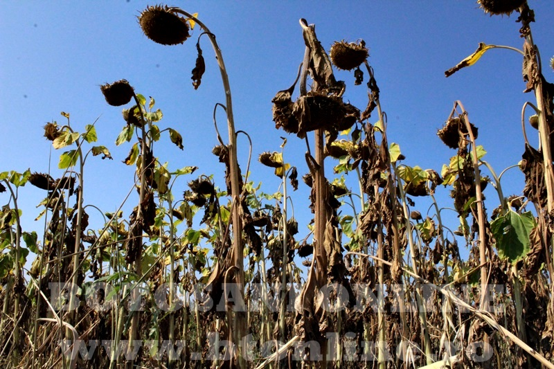 seceta in judetul Botosani (15)