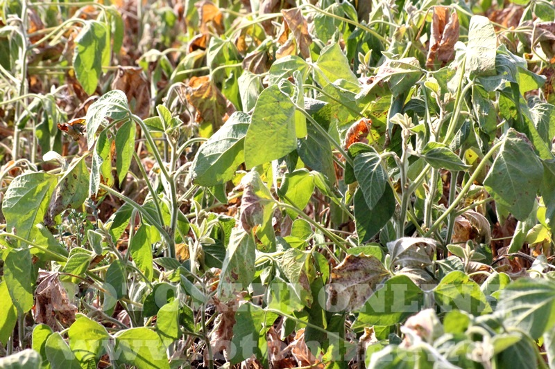 seceta in judetul Botosani (3)