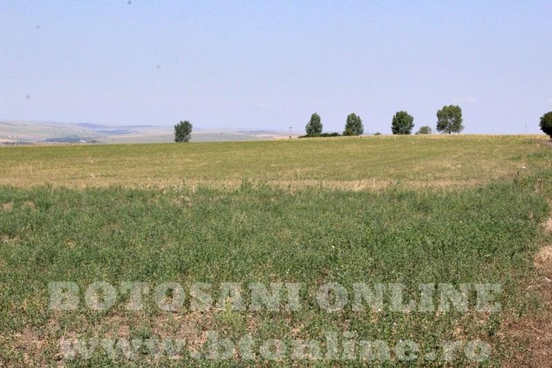 seceta in judetul Botosani (34)