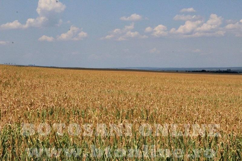 seceta in judetul Botosani (45)