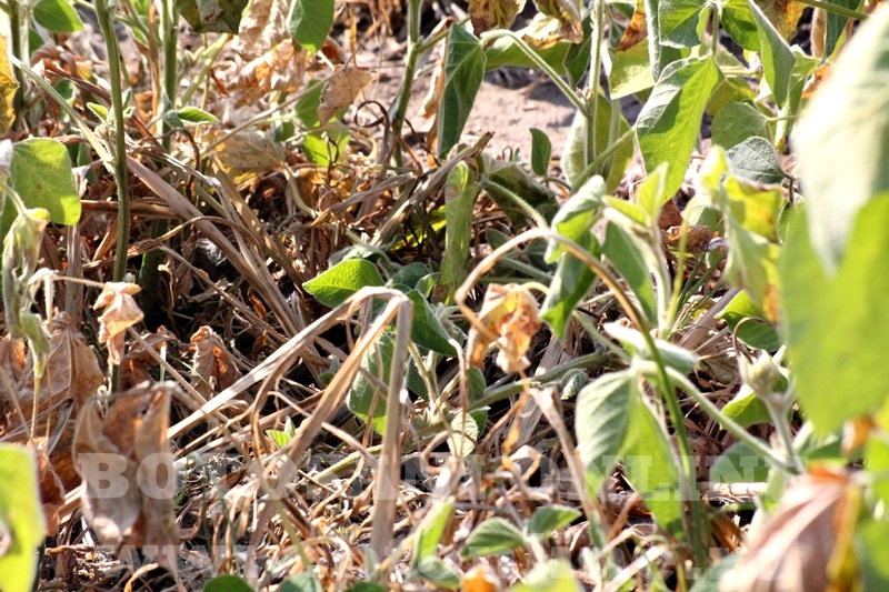 seceta in judetul Botosani (6)