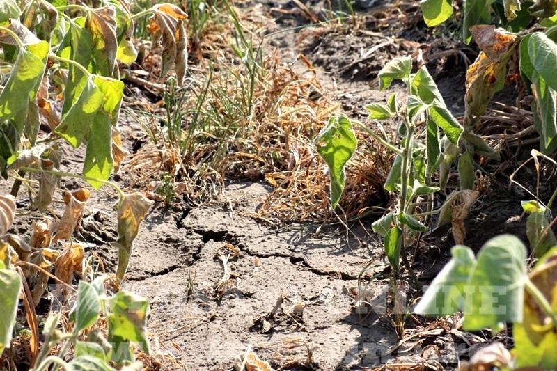 seceta in judetul Botosani (7)